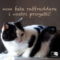 Hipster Cat collection. Le vostre idee, sempre in caldo!